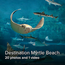 Destination Myrtle Beach